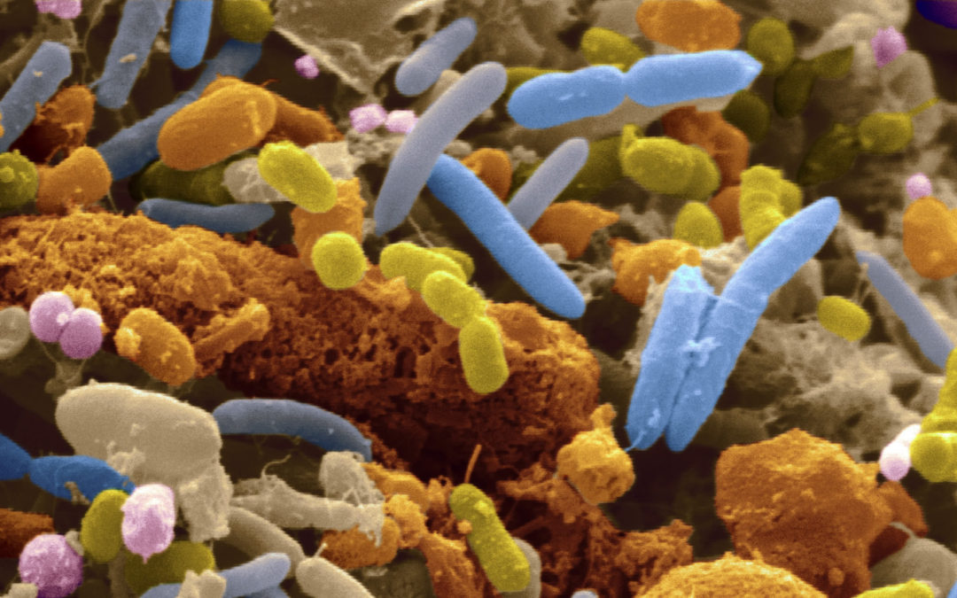 Great resource for human microbiome research – Microbiome Digest