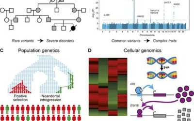 Evolution of the Human Immune Response