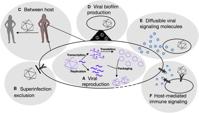 Sociovirology