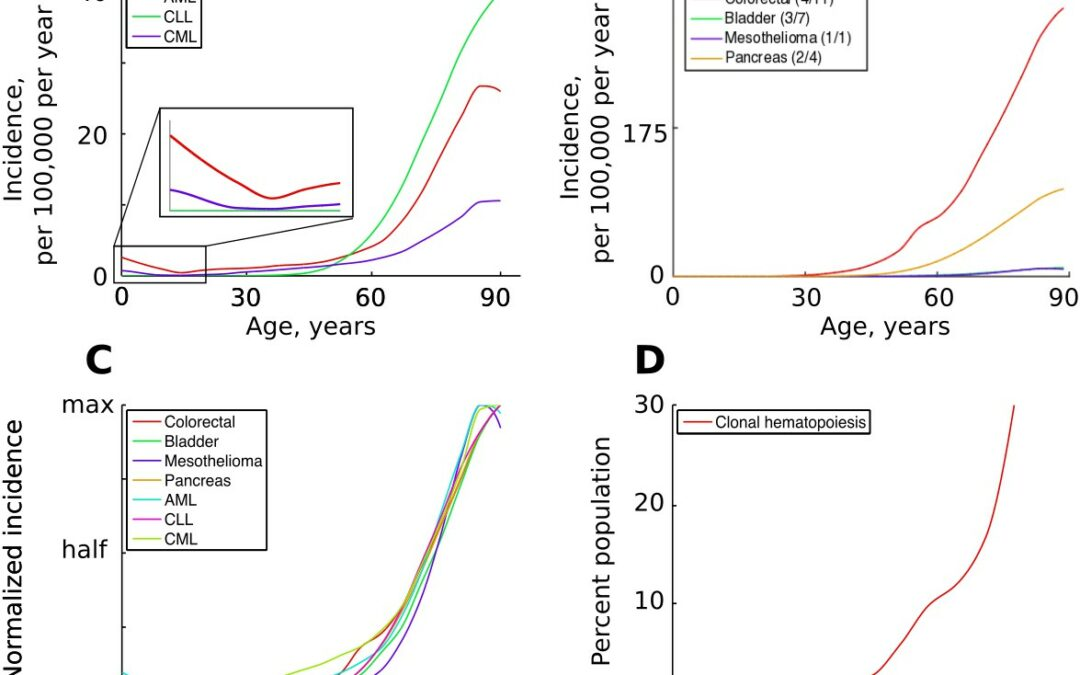 Why Cancer Rates Increase with Age